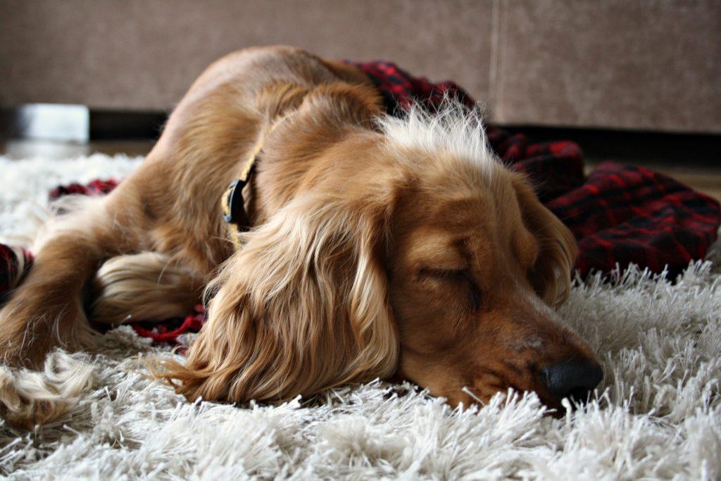 make me comfy zwycięzca średni pies