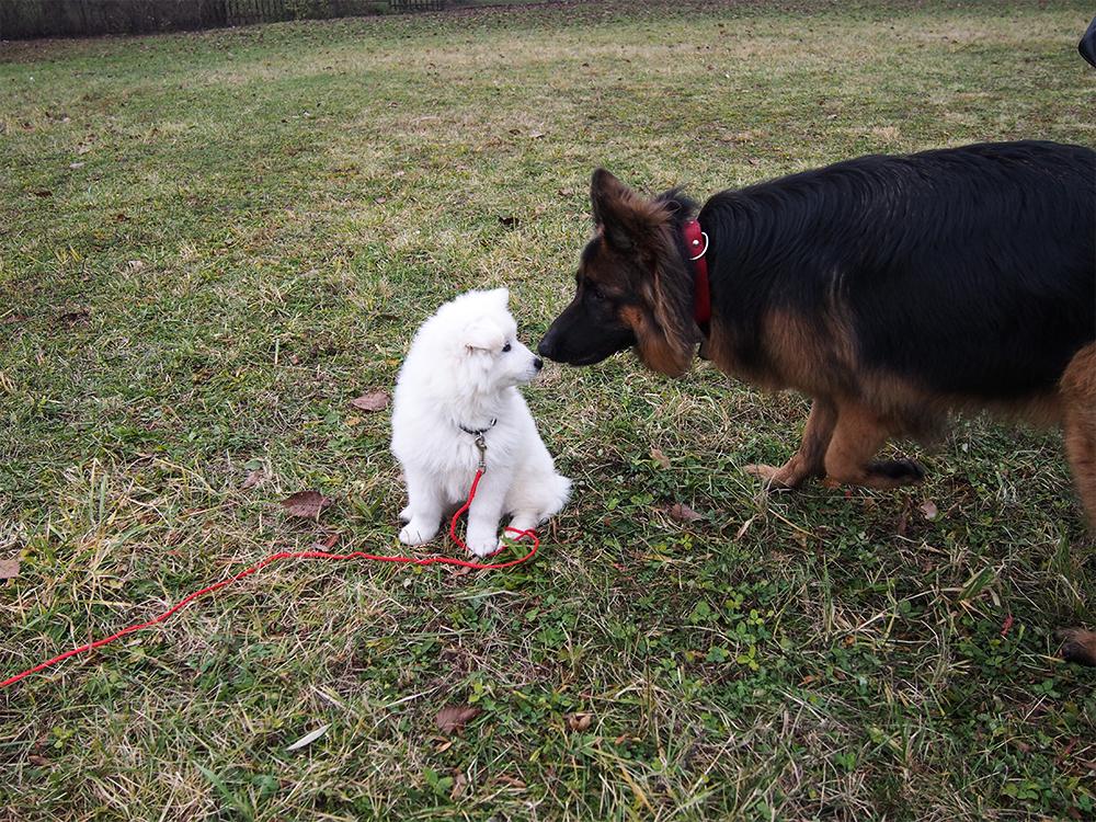 poznajemy psa ze szczeniakiem w parku