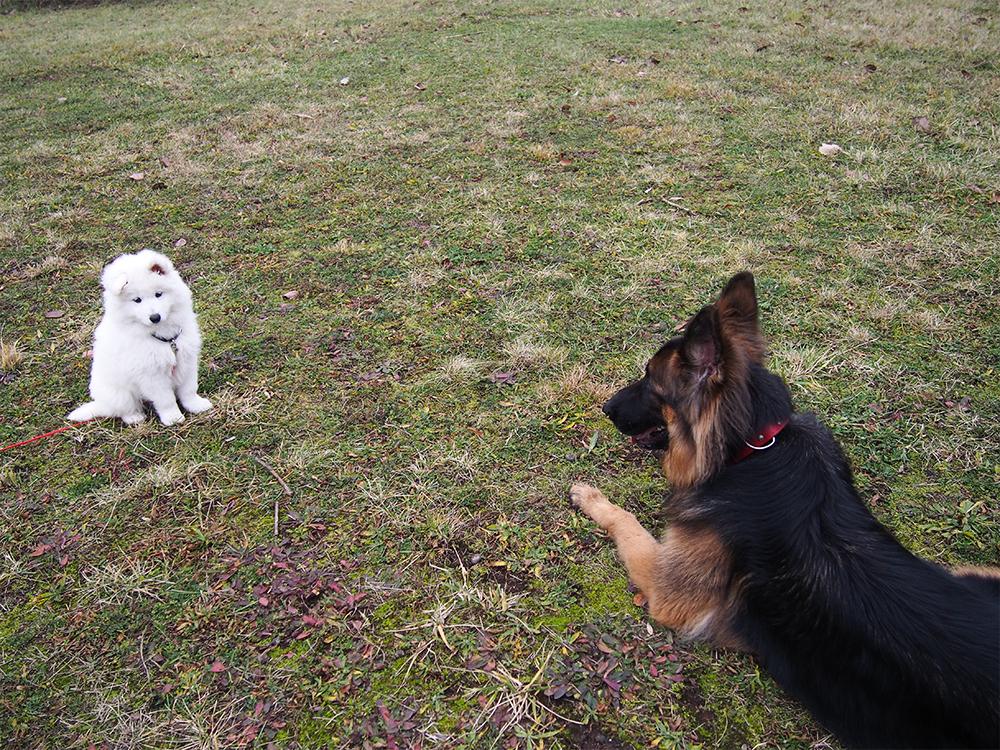 poznajemy psa ze szczeniakiem gdzie
