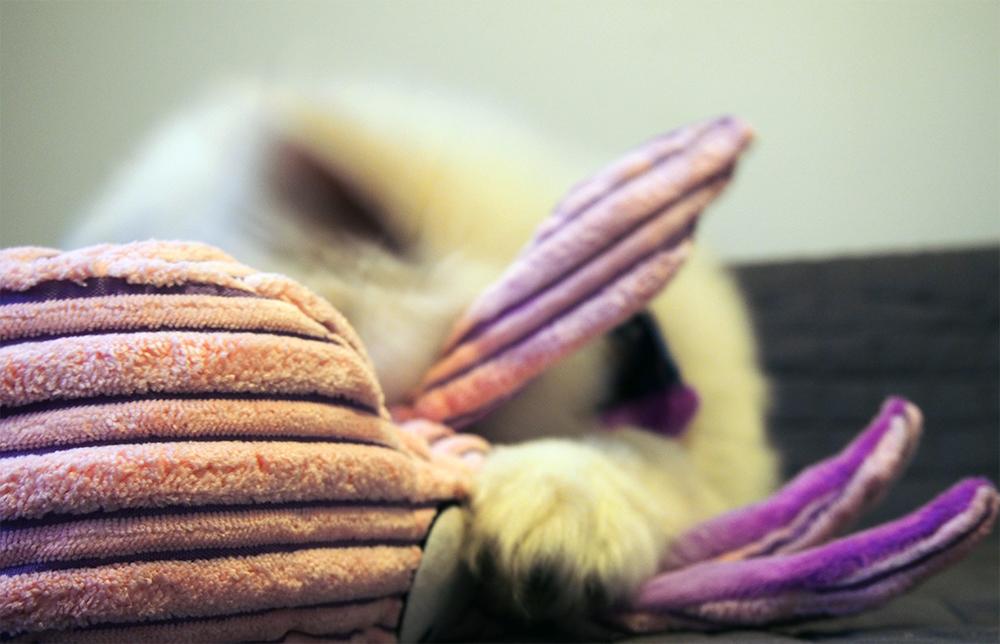 jak wychować szczeniaka miska
