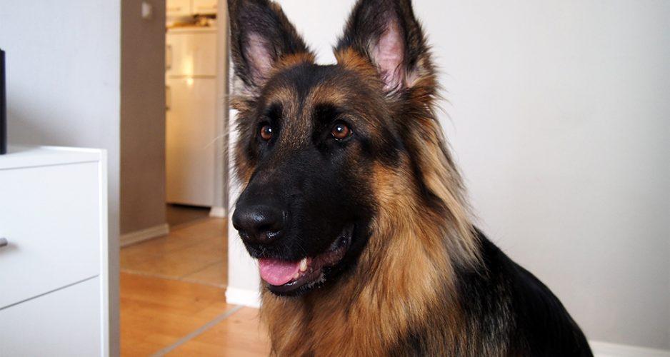 jak wychować nadpobudliwego psa