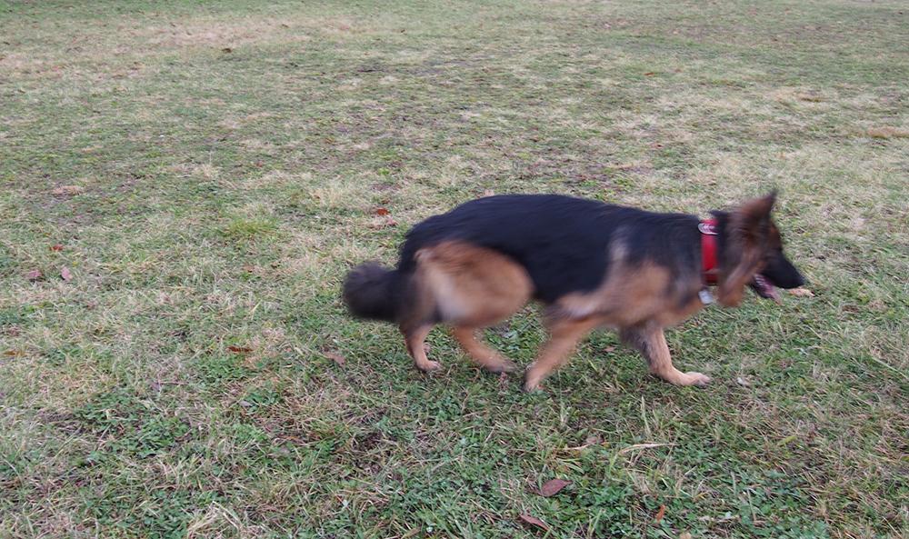 jak zrobić dobre zdjęcia psa czas migawka