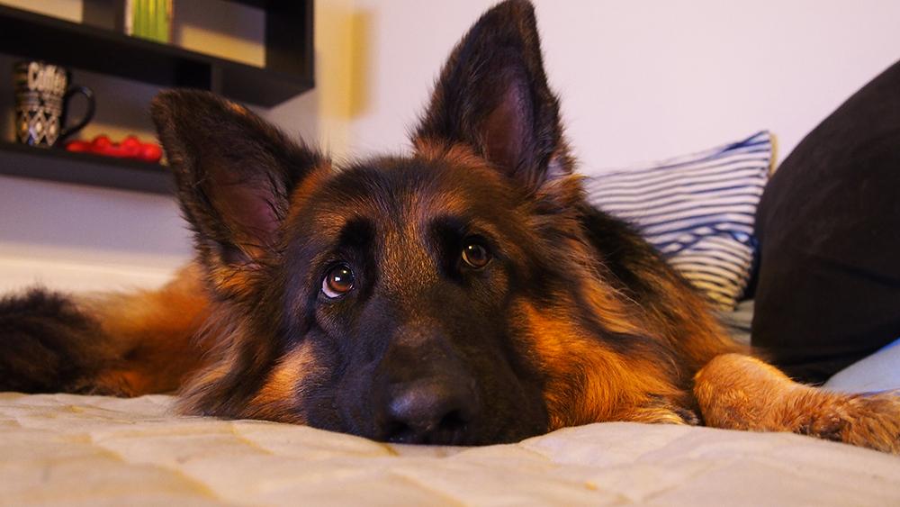 jak zrobić dobre zdjęcia psa podstawy