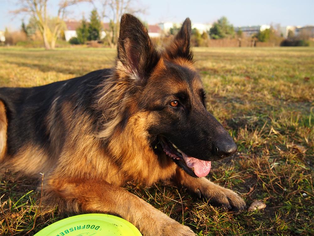 wychowanie nadpobudliwego psa test