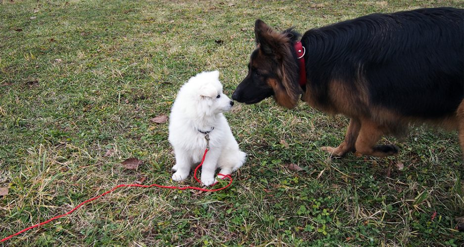 czy pies musi mieć kontakt z innymi psami