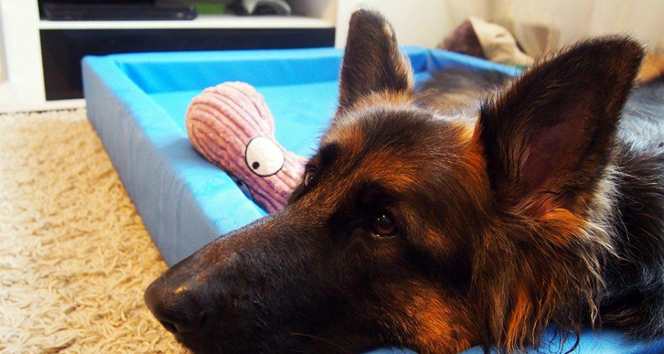 legowisko dla psa edoggy