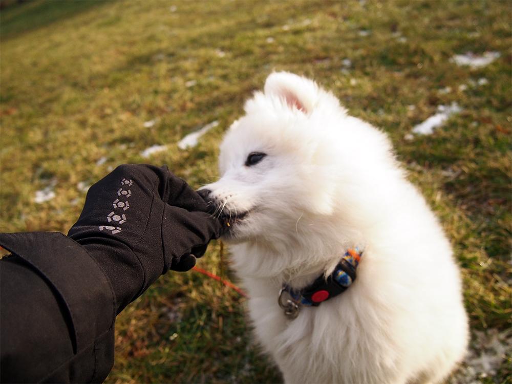 szkolenie szczeniaka reagowanie na imię