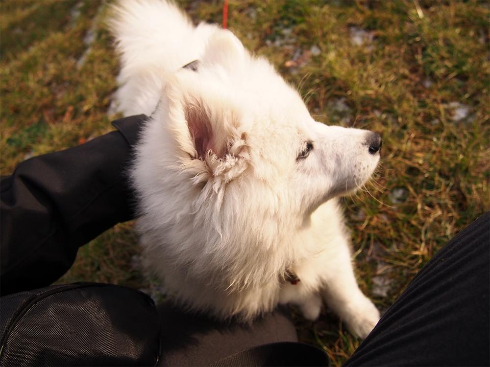 szkolenie szczeniaka trening