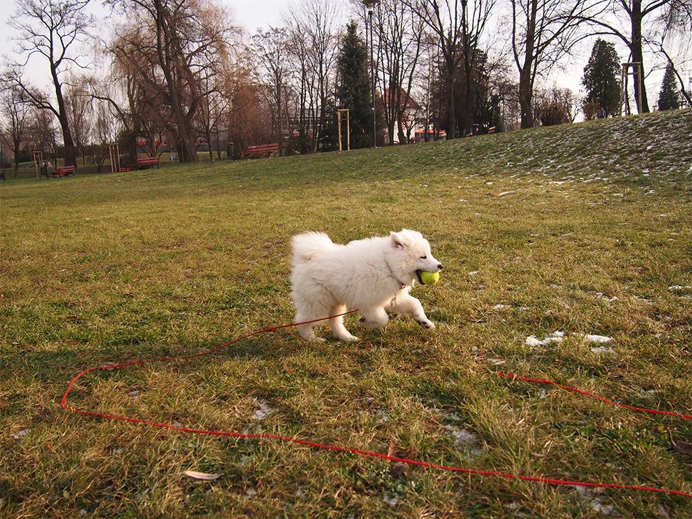 szkolenie szczeniaka porady