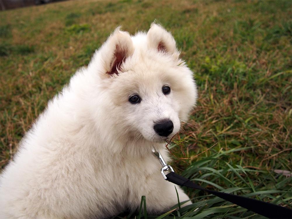 pies jako prezent świąteczny czy to dobry pomysl