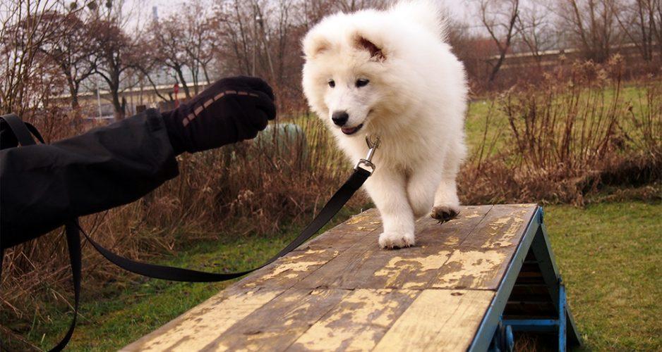 psi behawiorysta szkolenie psa