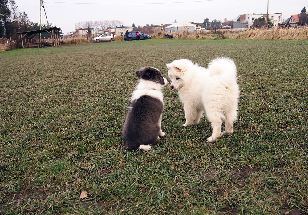psie przedszkole psy