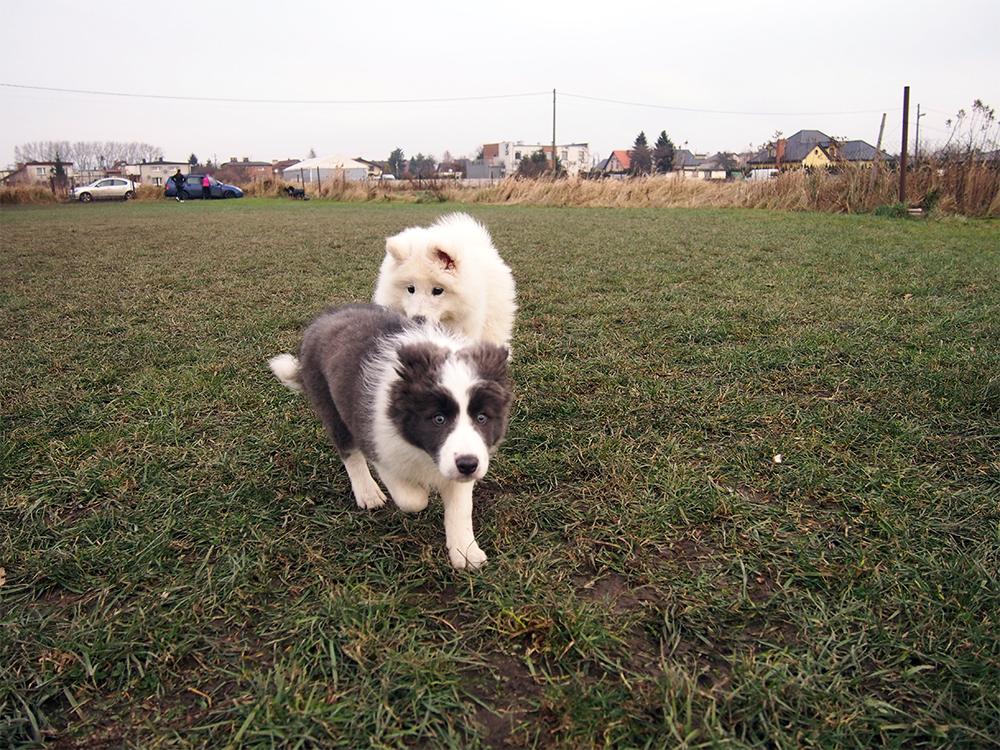 psie przedszkole psie spotkania