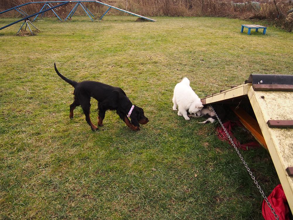 psie przedszkole spotkania z psami