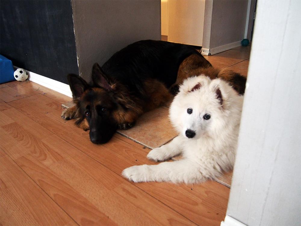 pies w sylwestra strachliwy pies