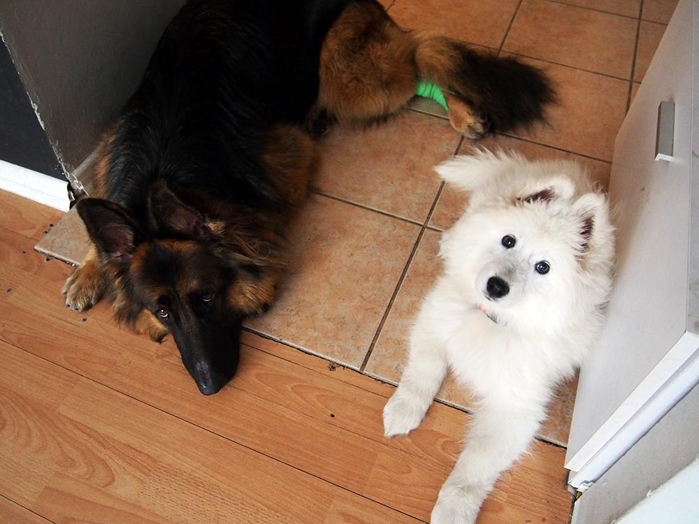 pierwszy miesiąc ze szczeniakiem i psem