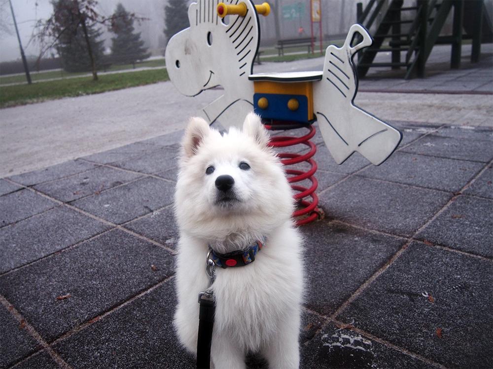 pierwszy miesiąc ze szczeniakiem spacery