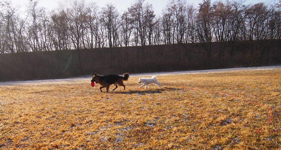 sylwester z dwoma psami