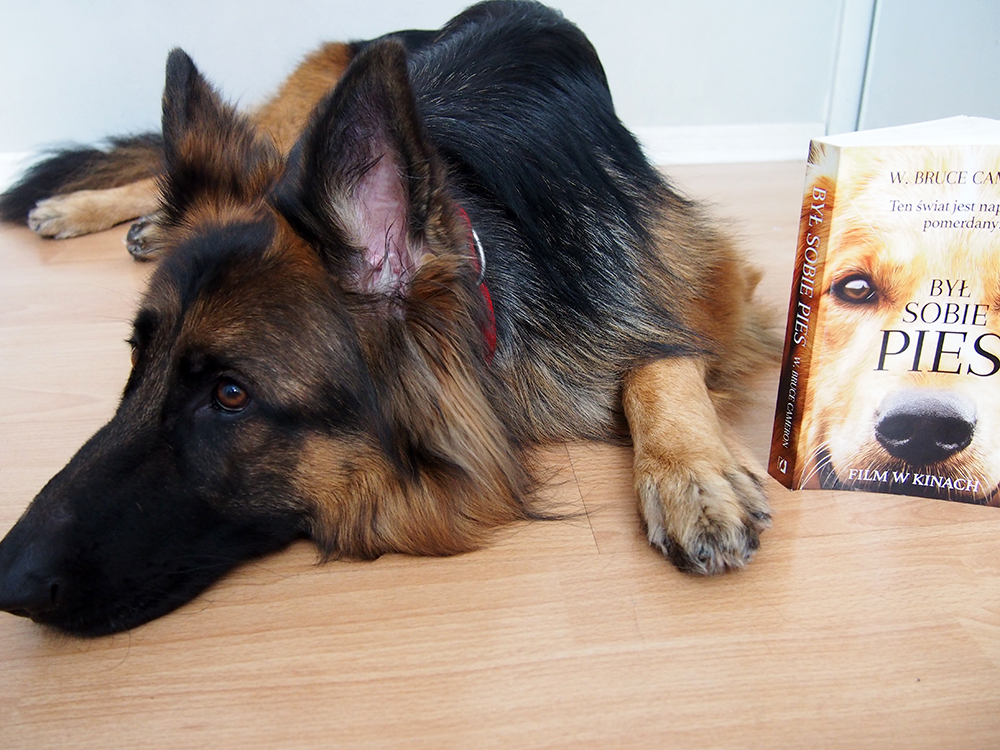 recenzja książki był sobie pies legion