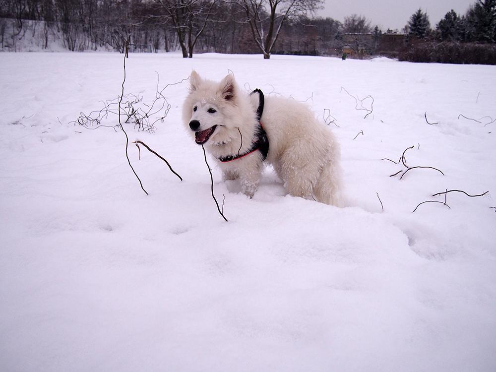 wystawy z psem formalności