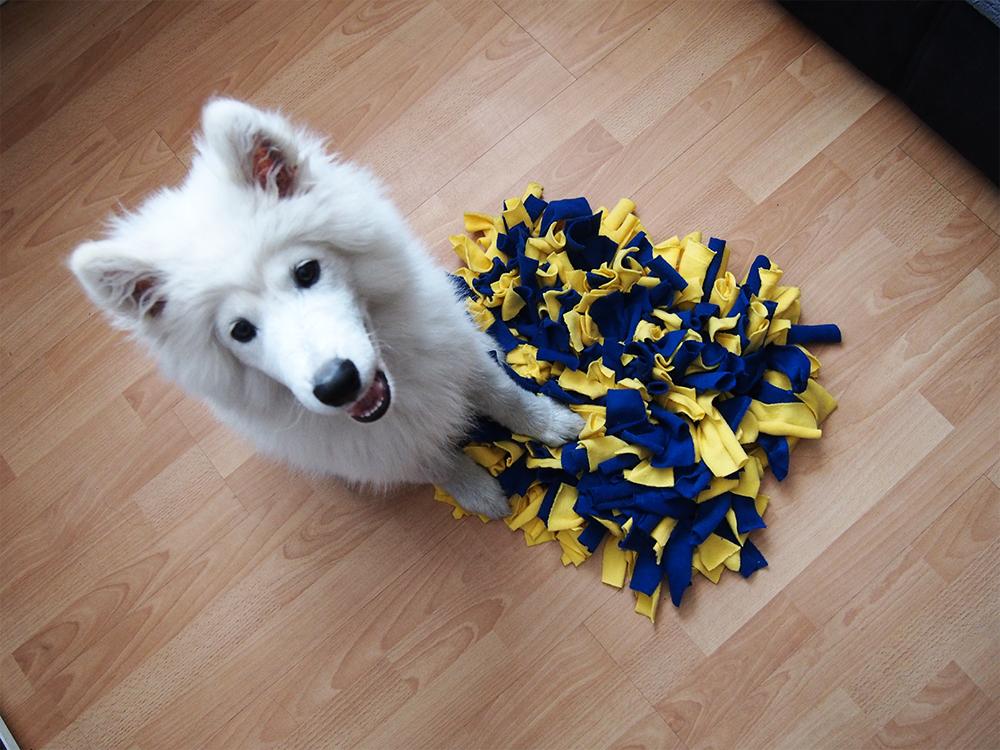 maty węchowe zabawa dla psa