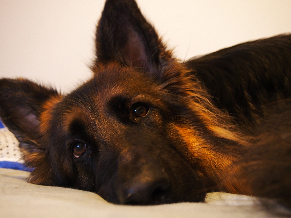 maty węchowe i dysk dla psa
