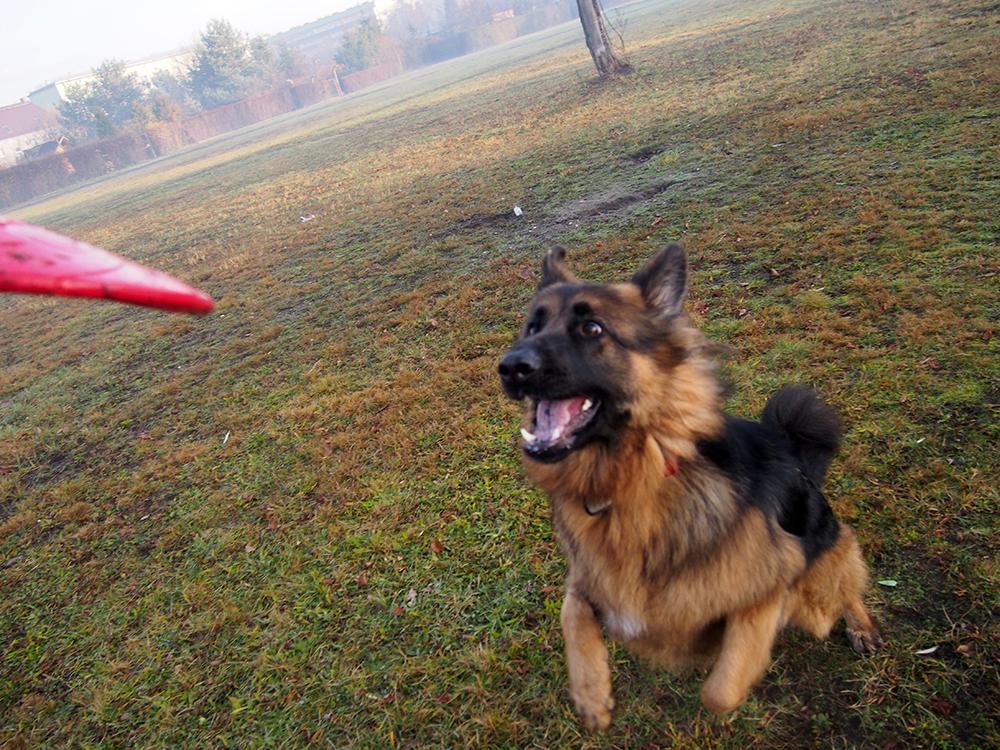 mata węchowa i frisbee dla psa