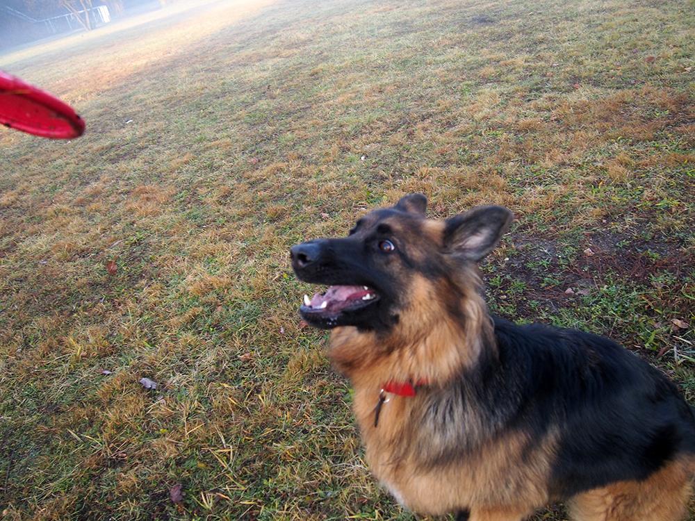 maty węchowe i frisbee dla psa zabawka
