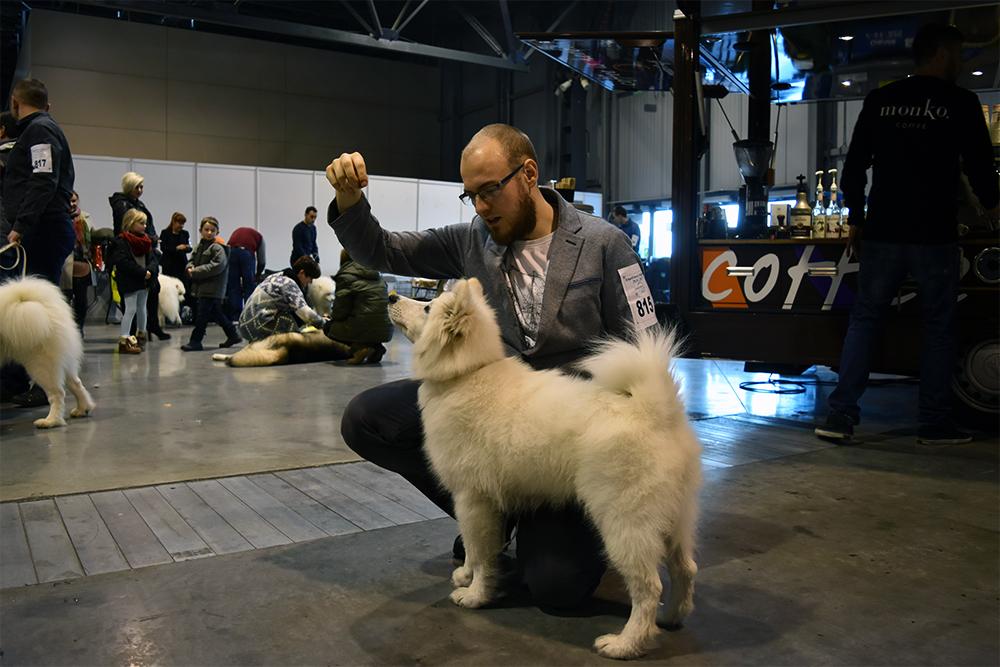 wystawy z psem Levi