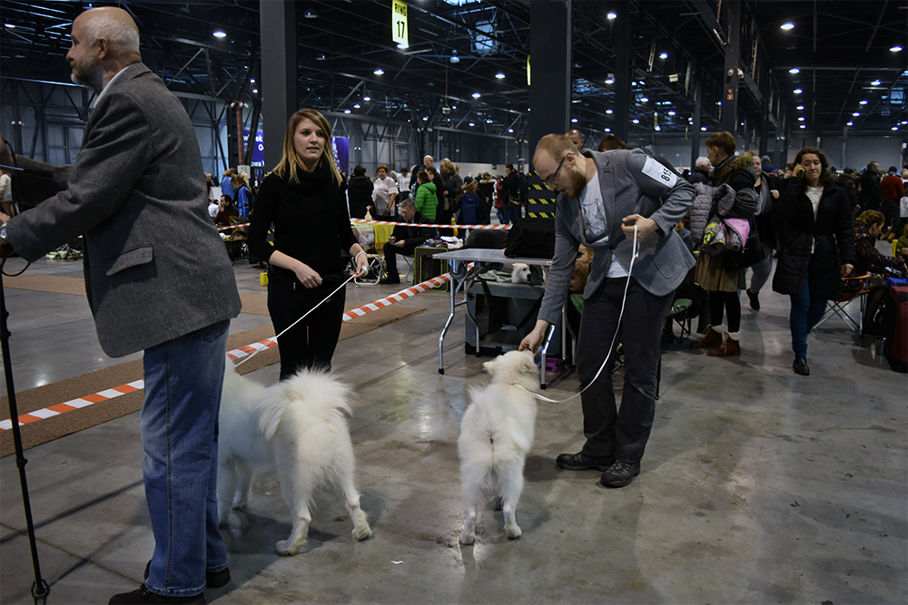 wystawy z psem wchodzimy na ring