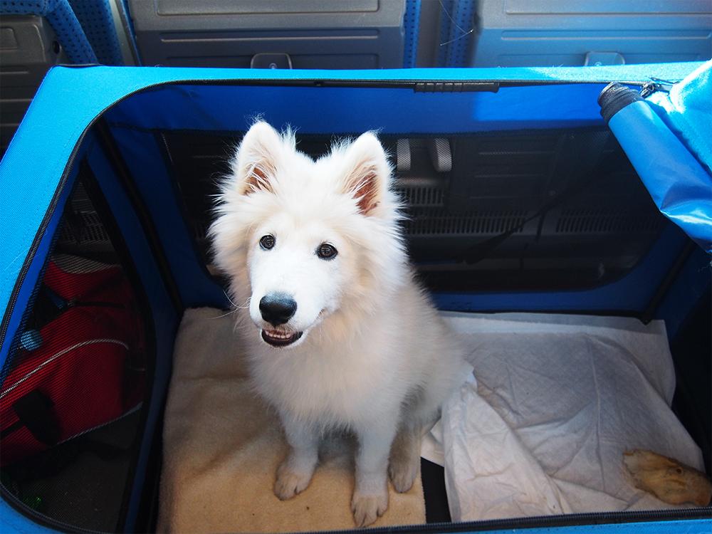 pies w pociągu komfort