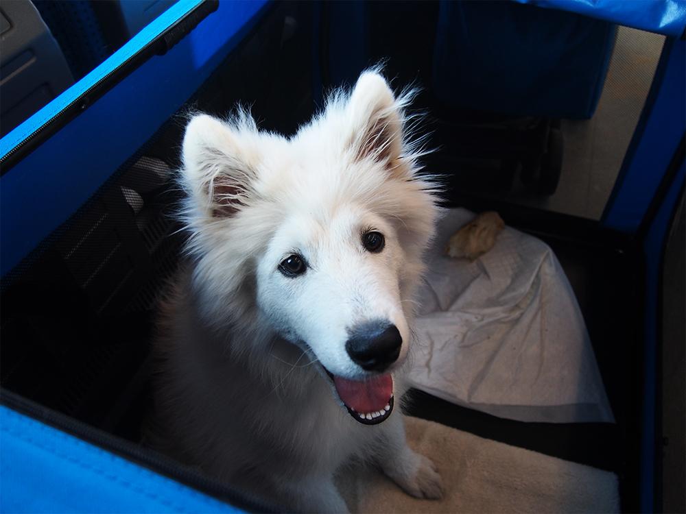 pies w pociągu zasady