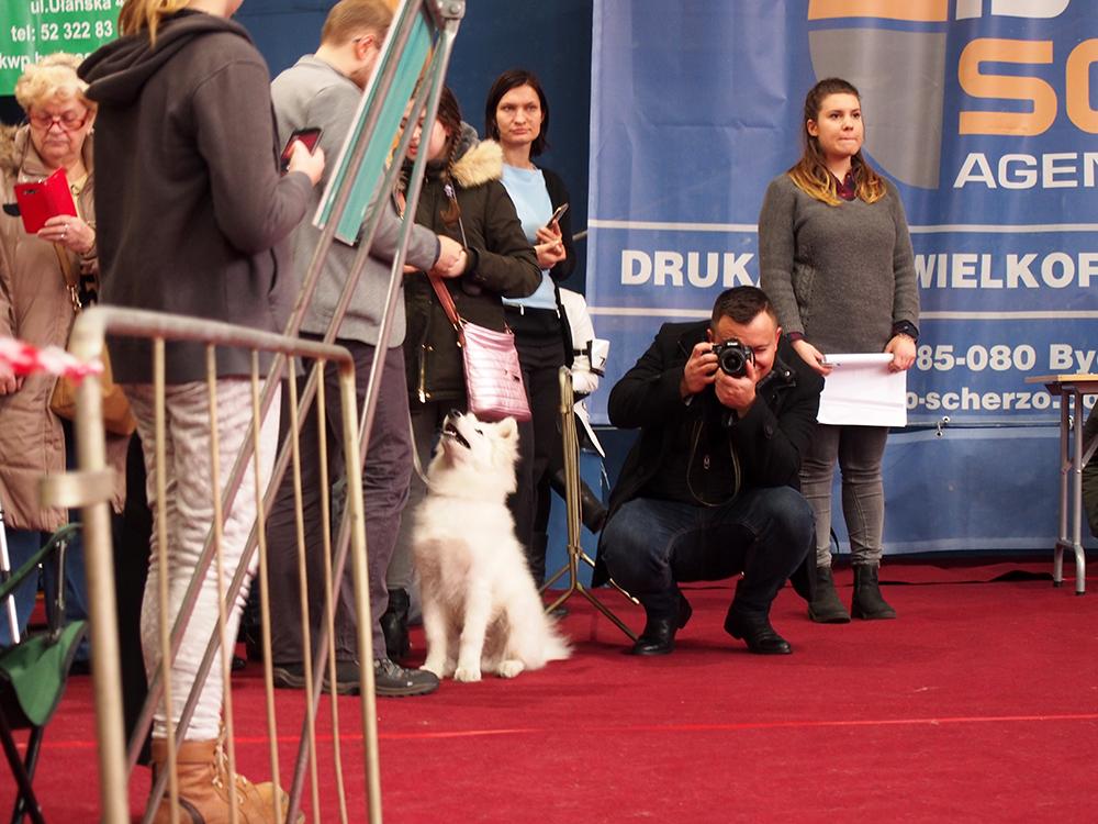 wystawa psów w bydgoszczy ring