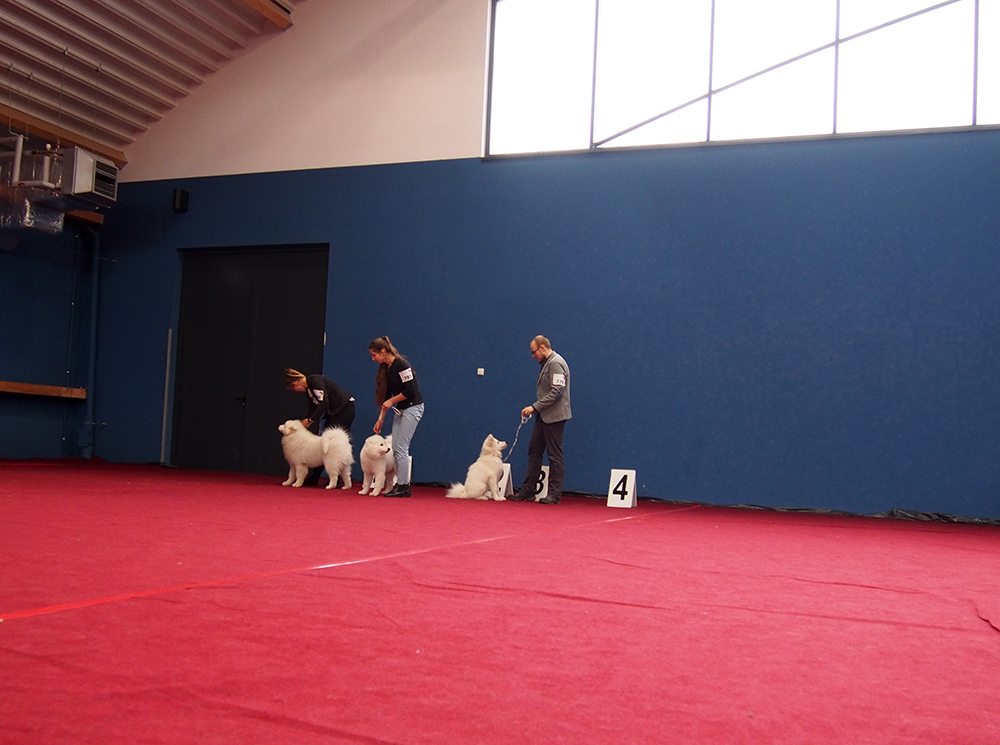 wystawa psów w bydgoszczy lokata