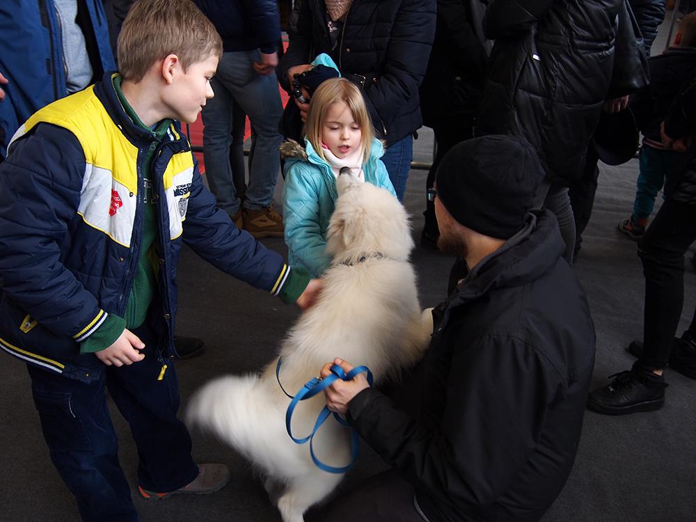 wystawa psów w bydgoszczy levi i dzieci