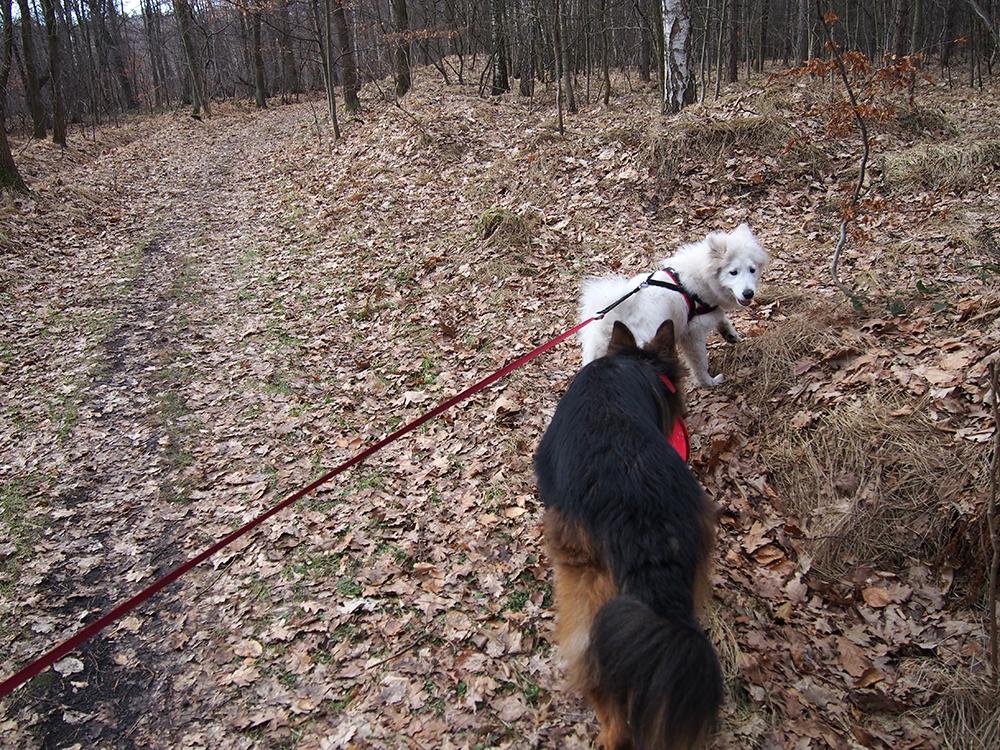 pies nadpobudliwy czy znudzony pies