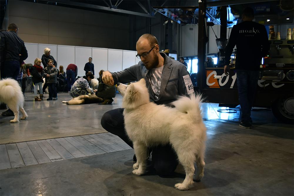 wystawy z psem Levi wystawa