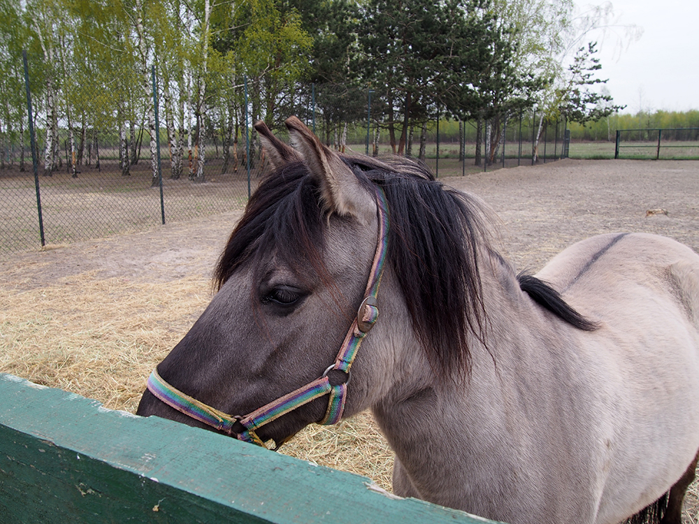 schronisko w korabiewicach konie