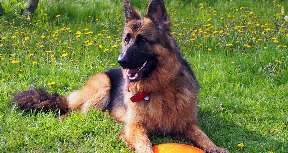 mantrailing z psem