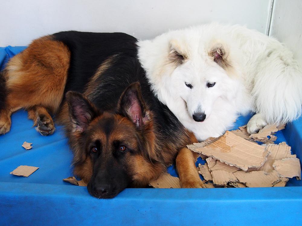 mantrailing z psem szkolenie dla psa