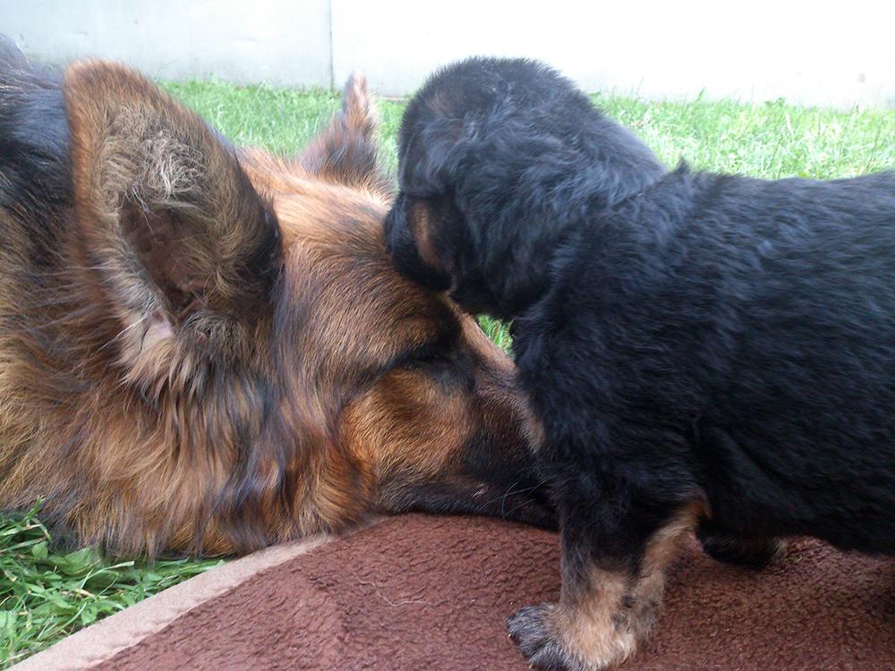 3 lata z psem szczeniak i mama