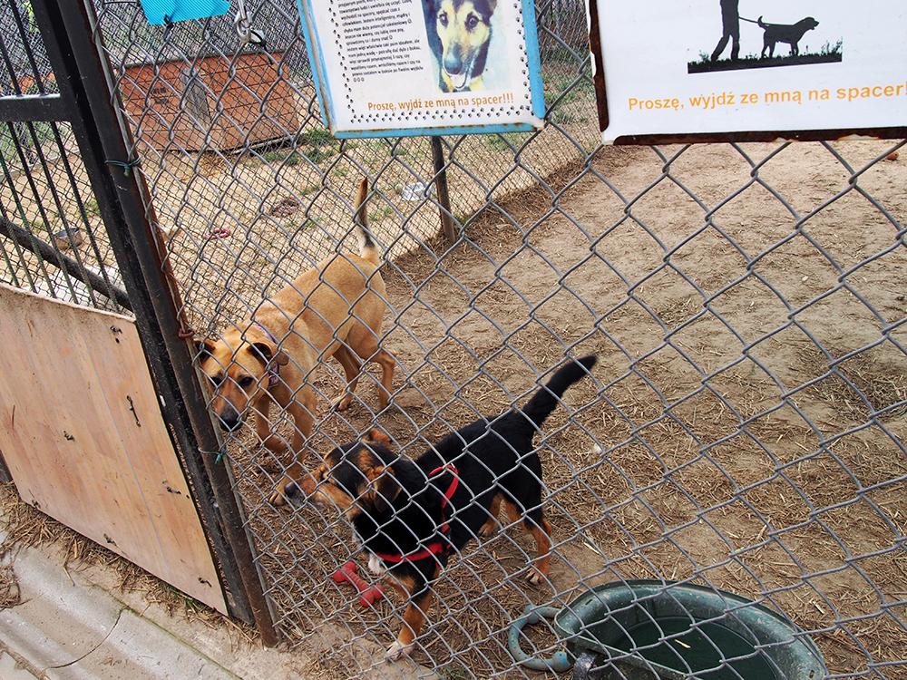 psy w schronisku 4
