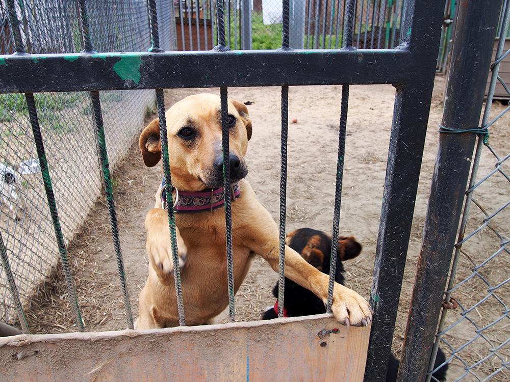 psy w schronisku 5