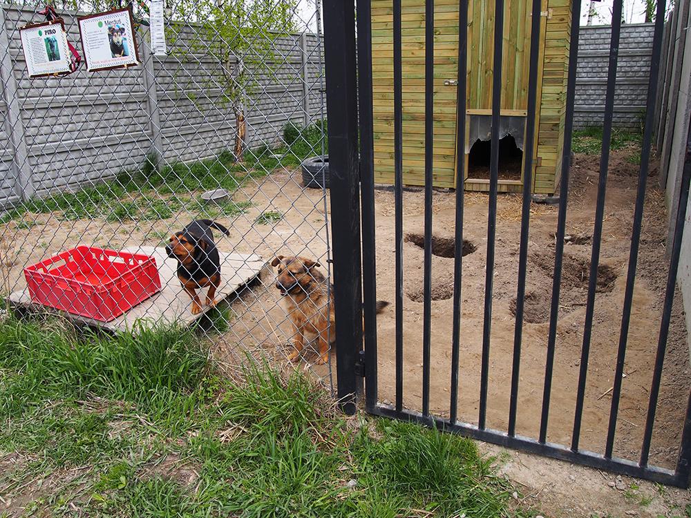 psy w schronisku 7