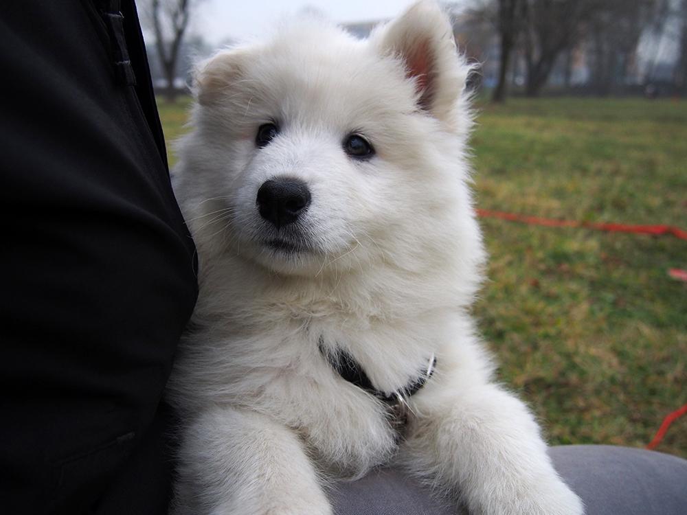3 lata z psem szczeniak pies
