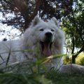 hodowcy psów