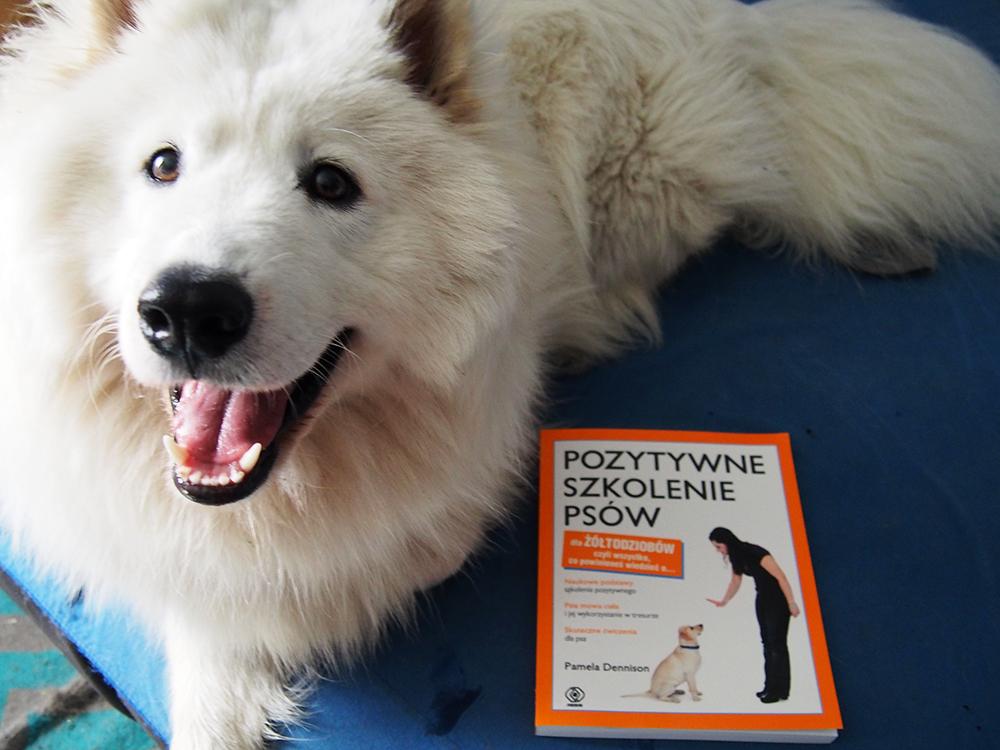 pozytywne szkolenie psów 4