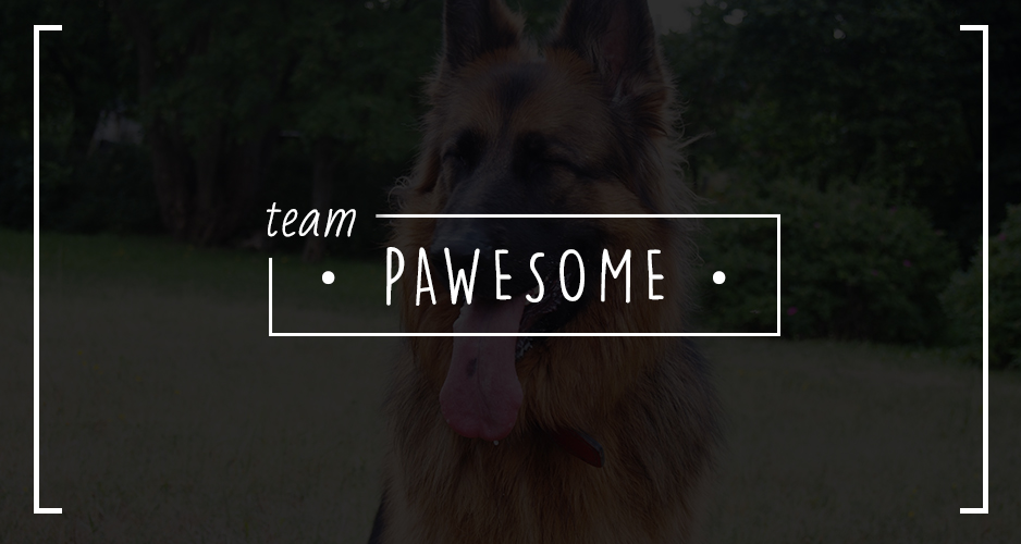 team pawesome