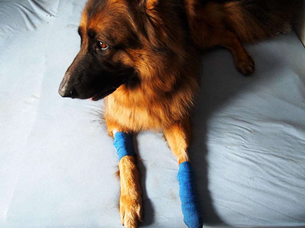 ubezpieczenie psa 2