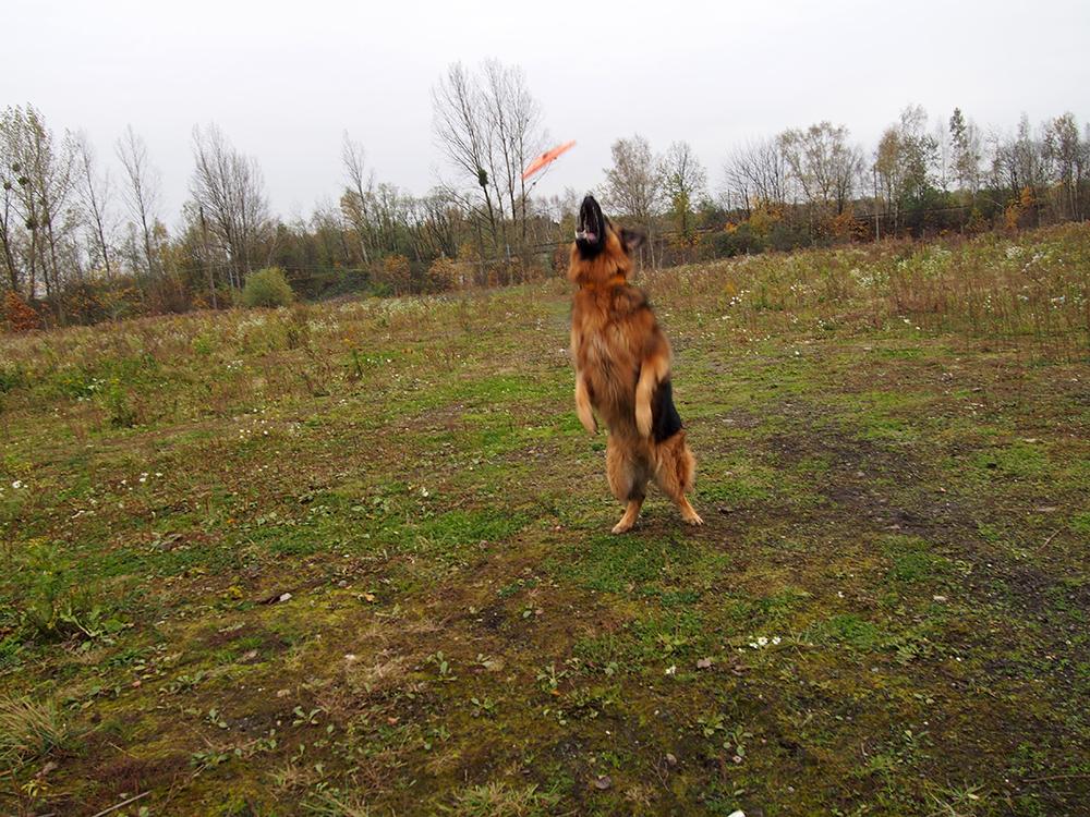 pies z hodowli 5